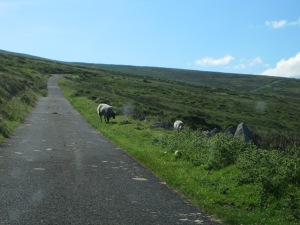 see how narrow the road is and the sheep are right up against it